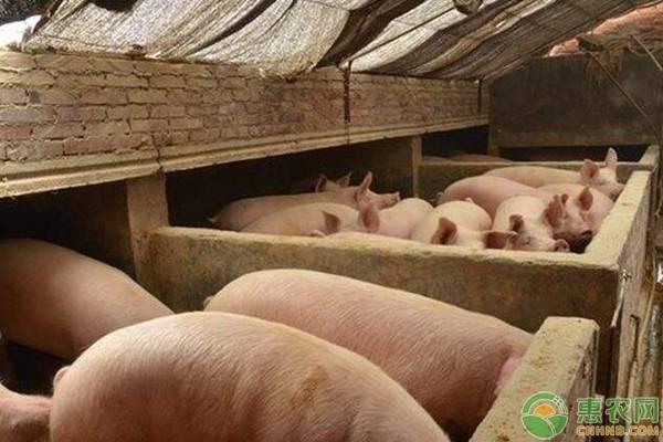 今日猪肉价格多少钱一斤?非洲猪瘟目前对全国猪价有什么影响?