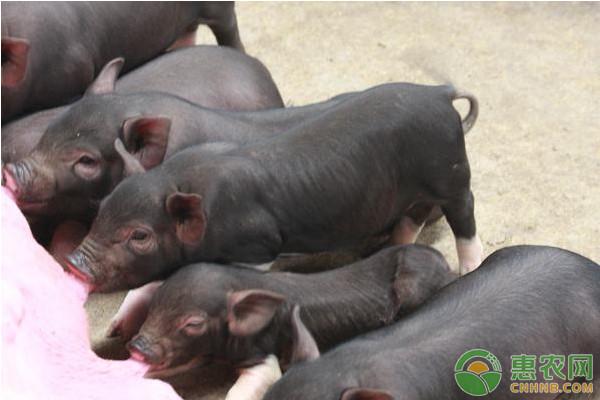 养猪有哪些补贴政策?2019养猪补贴政策解读