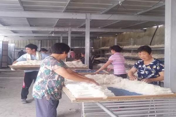 斑竹园镇漆店村种植竹荪的第一年,就喜获丰收!