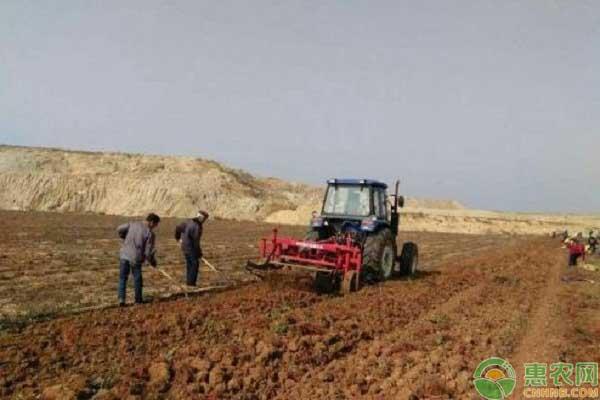 丹山产业种植项目发展