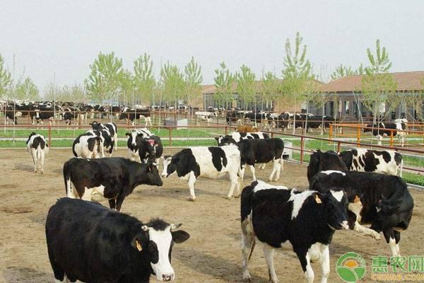 夏季养殖奶牛的防暑降温措施