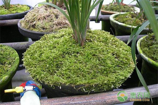 水苔价格要多少钱一斤?水苔有哪些优缺点?