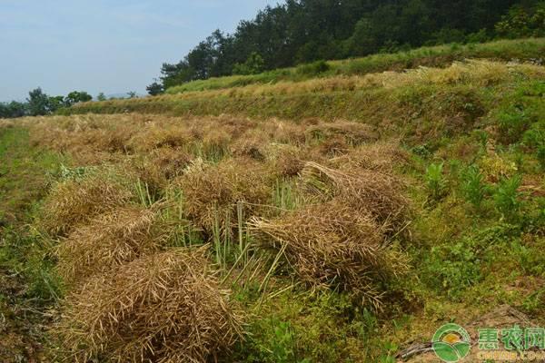 山东近期小麦价格行情分析,2019年下半年小麦价格会涨吗?