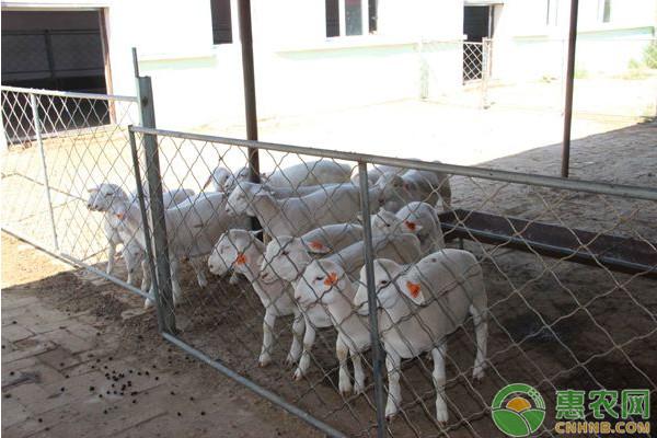 出生两个月的羊羔需要打哪些疫苗?这八种必打不可!