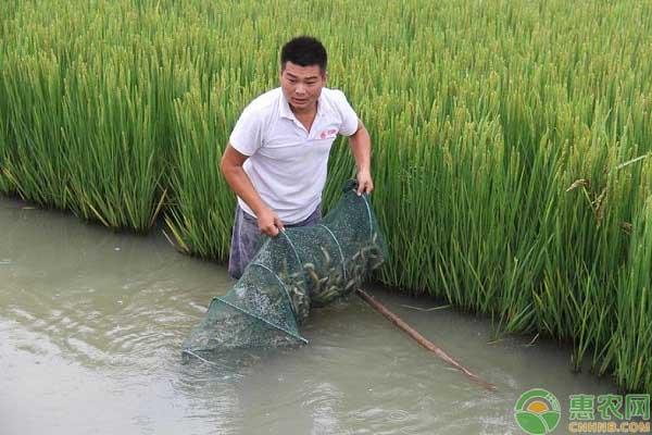 泥鳅苗的喂养方式