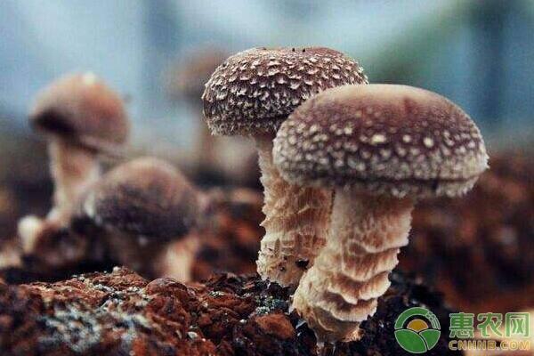 在农村种植哪些食用菌效益高?这六种就不错!