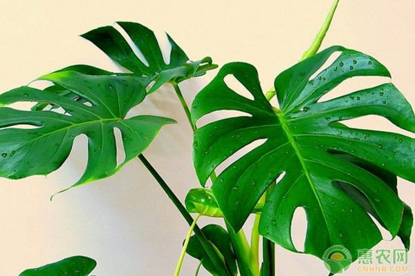 室内养殖植物