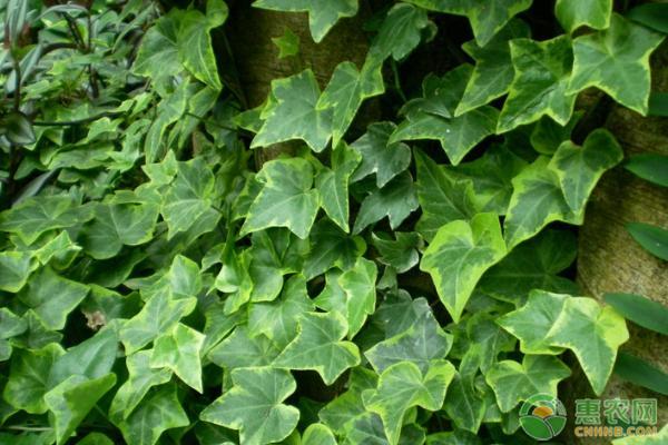 室内养殖绿植