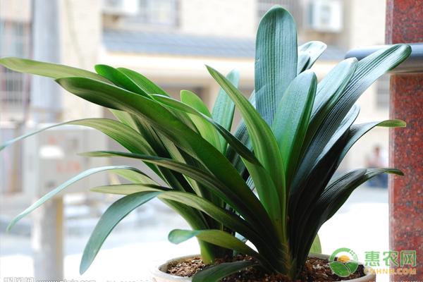 什么植物适合室内养殖