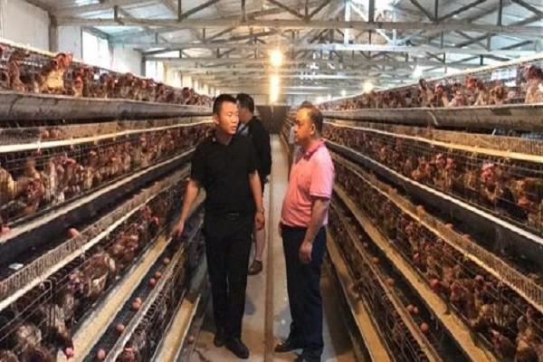 """""""无抗养殖时代""""来临,畜牧行业将出现哪些变化?"""