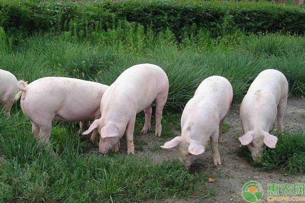 无抗养殖时代发展