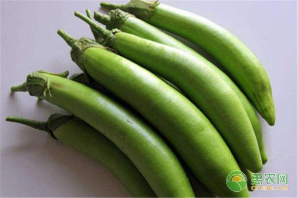 绿皮茄子产地与价格介绍,绿皮茄子与紫皮茄子有何不同?