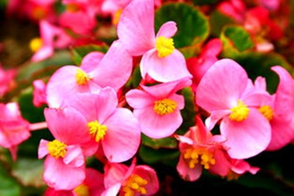 家里适合养什么花?这七种花一年四季都适合养家里!