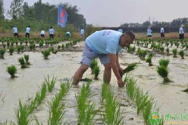水稻插秧技术要点