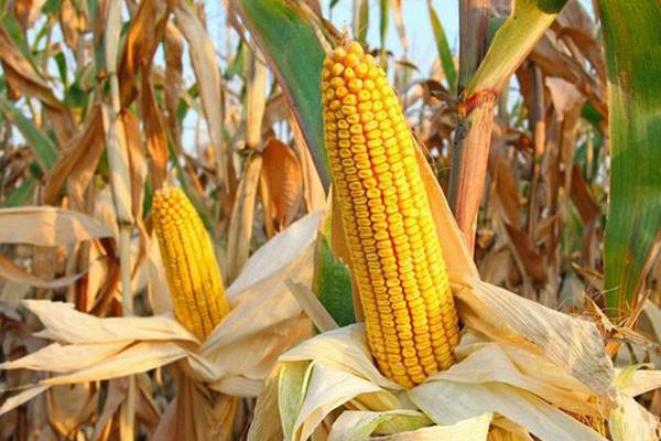 2019粮食补贴新调整,新增两类人,取消这三类农民补贴!