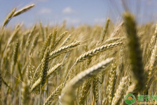 农民粮食补贴