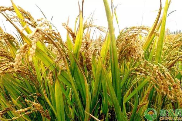 农民粮食补贴调整