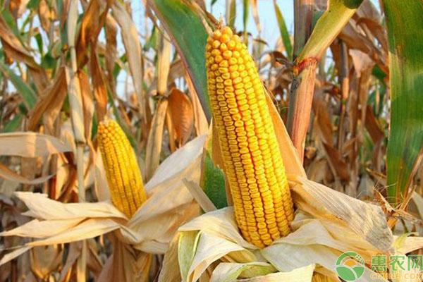 农民粮食补贴人群