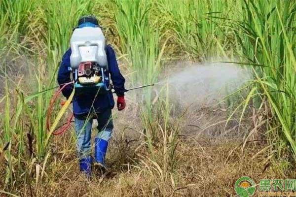 除草剂降解的主要途径
