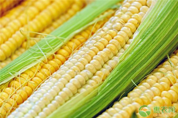 玉米的市场前景