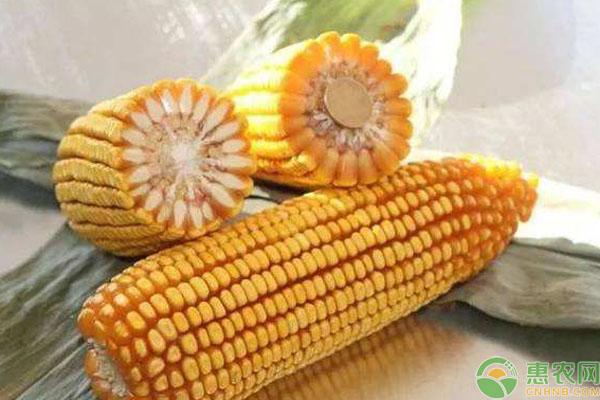 禁止销售的玉米种子