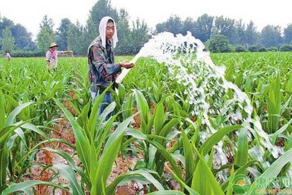 种植玉米遇到干旱情况要如何浇水?这五种浇水方式可供选择