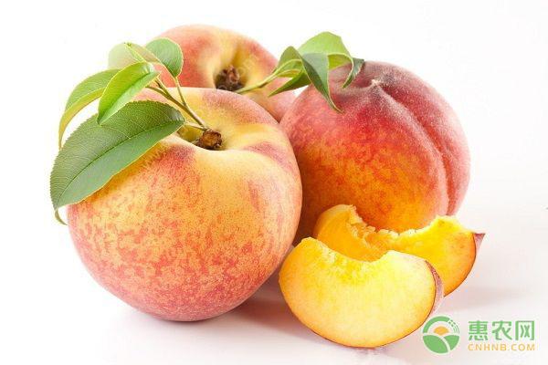 桃子不能和什么一起吃?