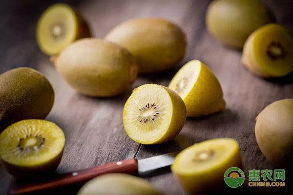 猕猴桃和奇异果是一种水果吗?