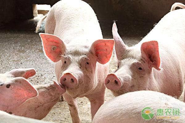 想要养猪效益好?这四个关键期不可忽视!