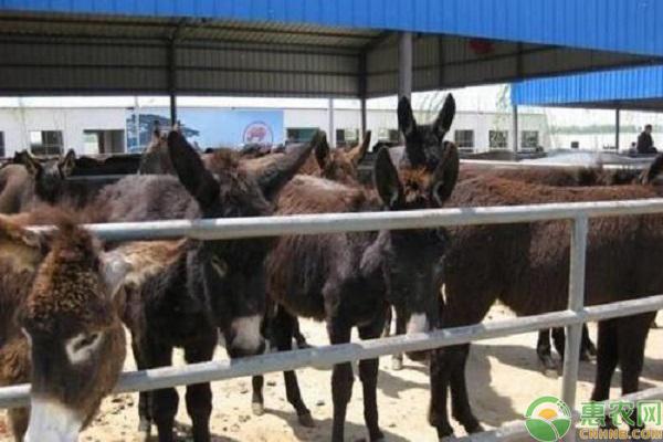 肉驴产业养殖