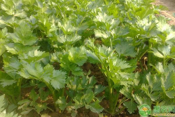 大暑过后还能种这四种蔬菜,农户们可以行动了!