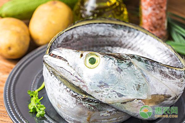 带鱼的生长习性是怎样的?为什么带鱼不能人工养殖!