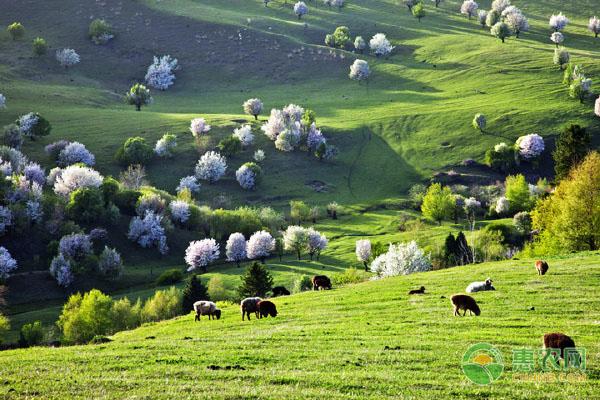 草原生态保护补助奖励政策