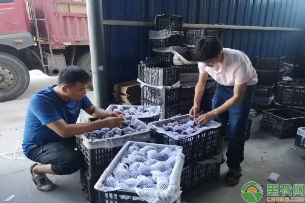 惠农网电商扶贫:充分利用平台优势,帮助周至县解决黑布林滞销问题
