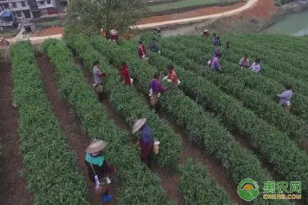 承包荒山,开启绿色农品种植之路