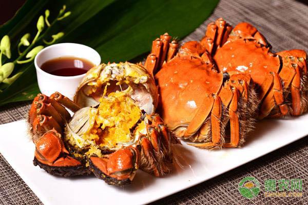 螃蟹都有哪些常见品种?螃蟹品种及特点介绍