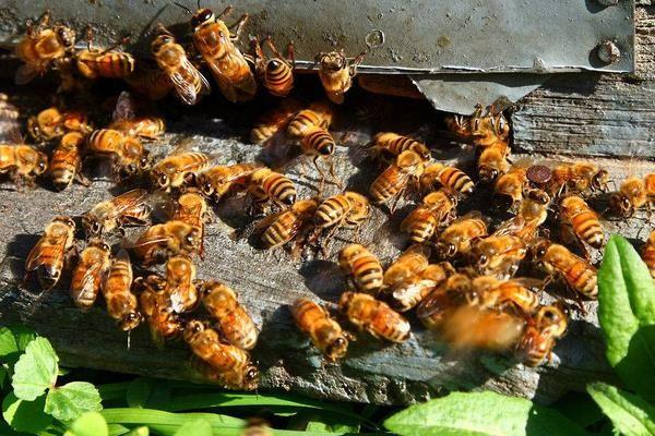 惠农网电商扶贫:辛辛苦苦追花人,甜甜蜜蜜养蜂业