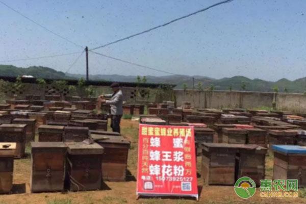 白手起家:蜂蜜让养蜂人成就了事业