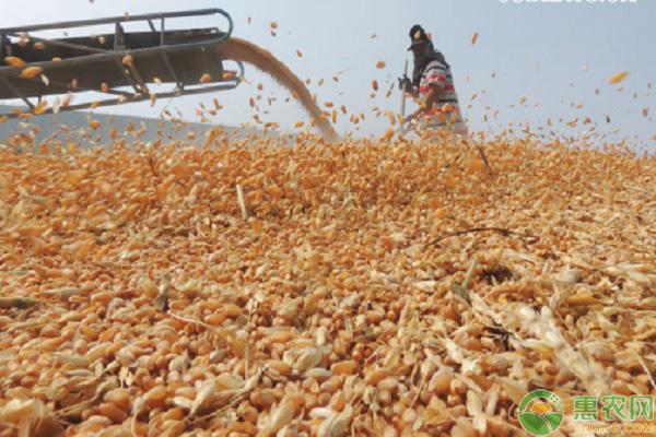 小麦不涨价的原因