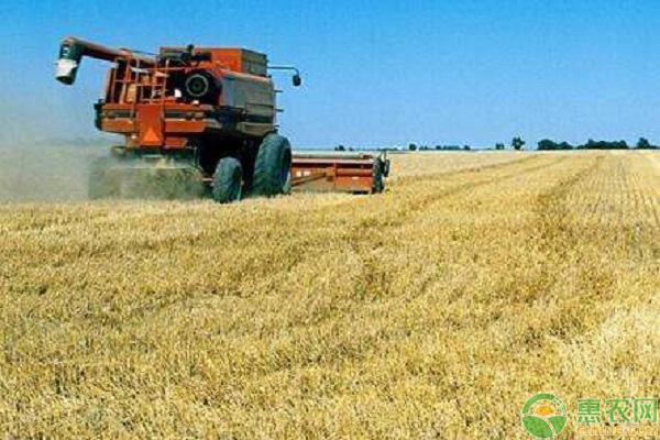 小麦市场行情走势
