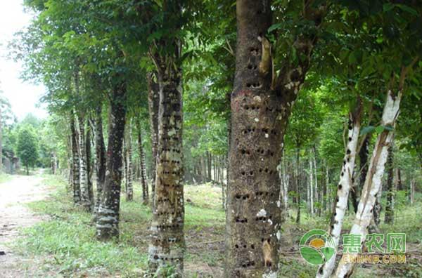 备受重视的十种珍贵木材介绍