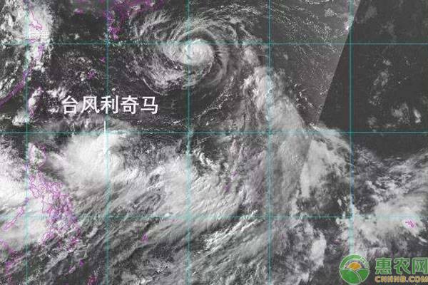 利奇马台风过后,农作物需采取合理的应对措施!
