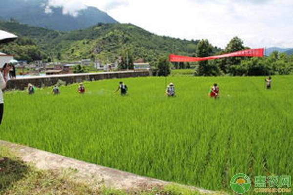 台风来了农业生产生该采取哪些措施