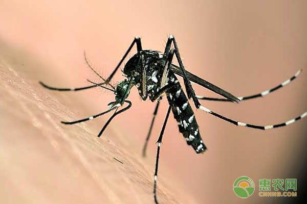 灭蚊子最有效的方法是什么?被咬后如何消肿止痒?