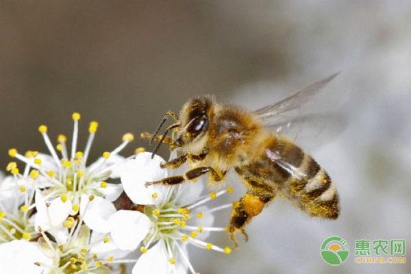 被蜜蜂蛰了会出现怎样的症状?
