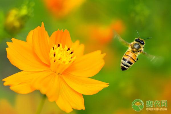 被蜜蜂蛰了的注意事项
