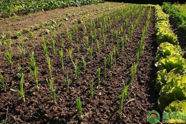 未来农业创业项目