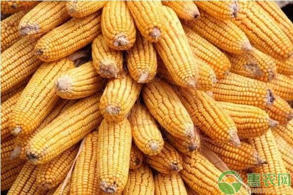 2019玉米价格