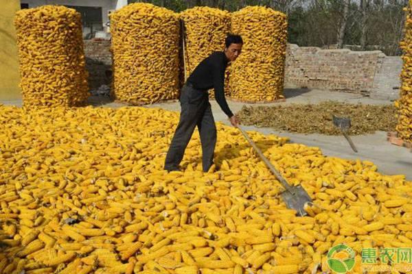 什么原因导致玉米价格下行?