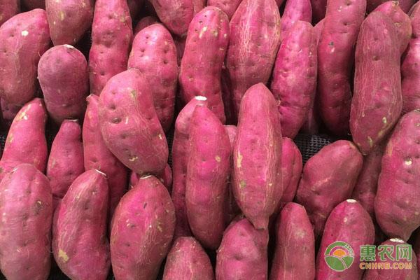 红薯亩产量多少斤?